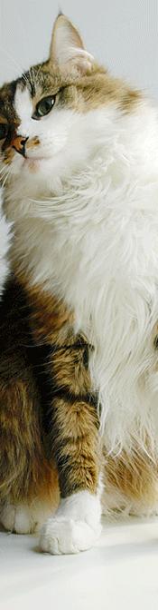 Kissan pissan hajun poisto