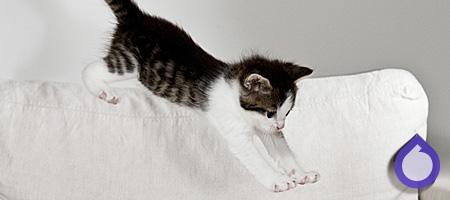 kissanpissa